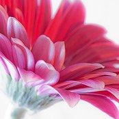 Фотографируем цветы
