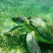 Советы: Подводная фотография