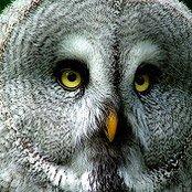 7 советов как фотографировать птиц
