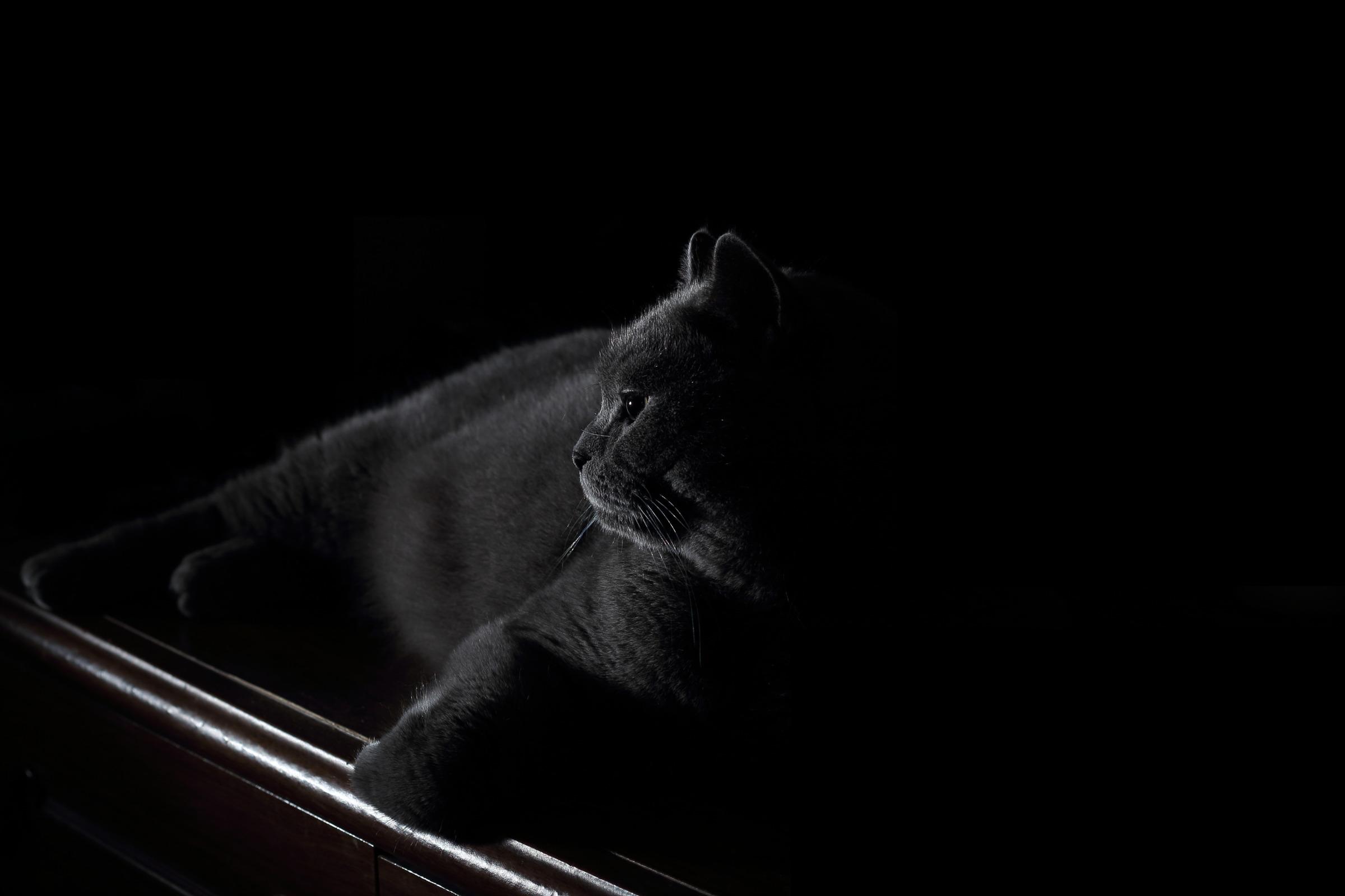 Как снимать темные объекты на темном фоне Как сделать фото с черным фоном